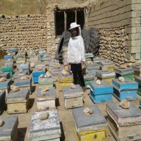 از مهندسی برق تا زنبورداری