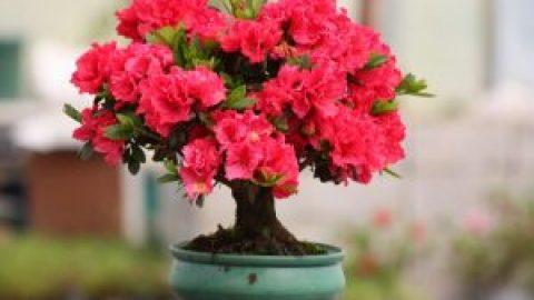 پرورش گل های زینتی و آپارتمانی