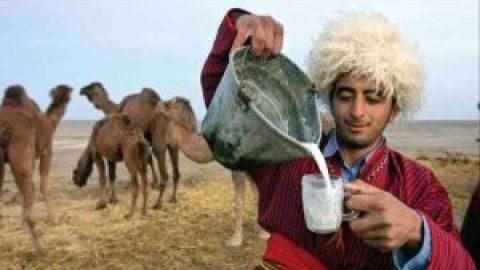 انبارالوم؛ قطب شیر و دوغ شتر