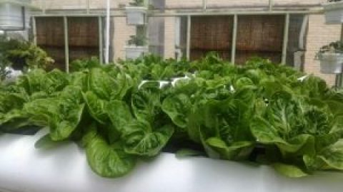 کشاورزی بدون کشت خاک با ماده هیدروپونیک